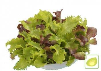 mieszanka sałat fitness baby leaf