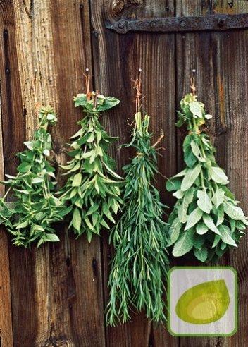 Mieszanka ziół ogród ziołowy na wiele lat