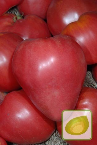 Nasiona Pomidor Malinowy Olbrzym Nasiona Nasiona Warzyw Cebule
