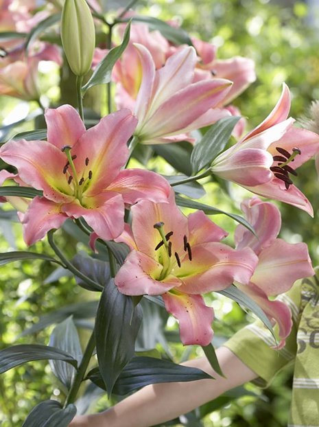 Lilia (Lilium) On Stage